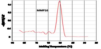 Gene Scientific Accuamp Sybr Green Qpcr Master Mixes